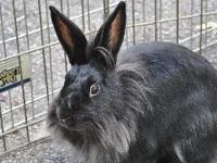 Sassy is one of eight siblings that came to us from