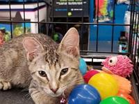 Sassy Purr's story You can fill out an adoption