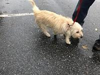 Sassy's story Meet Sassy! She is a 4 year old terrier