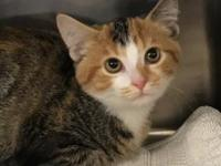 My story Hi, my name is Sassy. I am a very sweet girl