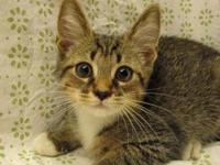 Saul's story 18-C08-016 Saul Breed: DSH Mix Size:
