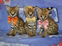 Animal Type: Dogs Adorable and playfull Savannah cats