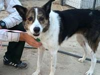 Savannah's story Savannah is an adult female Cattle dog
