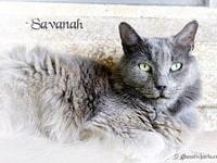 Savannah's story All of our pets are spay/neut, up to