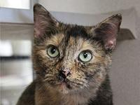 Savannah's story Primary Color: Muted Tortoiseshell