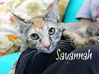 Savannah's story The adoption fee is $85.00 with an