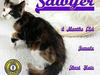 Sawyer's story You can fill out an adoption application