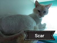 Scar's story Scar came to us in May with a deep cut on