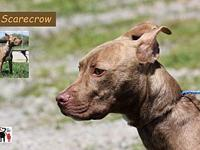 Scarecrow's story Scarecrow has been at the shelter