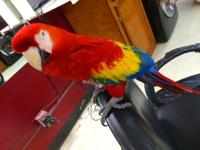 I heve Scarlet Macaw, very very friendly, male has have