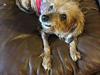 Scarlett's story ADOPTION FEE IS $300 Scarlett is a