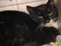 SCATTER's story Meet Scatter, a 3 year old Neutered
