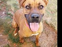 Scenic's story Scenic is a beautiful boxer mix that we
