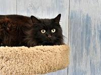 Schroedinger's story This beautiful 3 year old is a