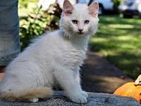 SCHUBERT's story My name is Schubert and I am a kitten