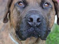 Scooby Doo (fostered in TN)'s story Angels Among Us