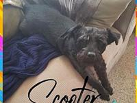 Scooter's story These sweeties are available for