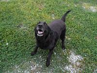Scott's story Scott is a neutered male Lab mix found as
