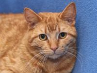 Scott is a sweet 2-year-old kitty who was transferred