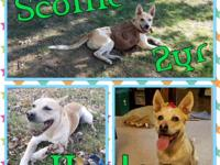 Hi there my name is Scottie! I was recently returned to
