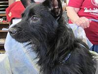 SCOTTIE's story Super sweet little Scottie is sitting
