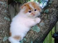"""""""KAPP"""", as we call him is just Adorable!! He is the"""