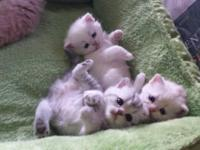 Kittens all set to see and book and goe residence at