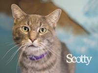 Scotty's story Scotty is king of the cats, this big