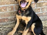 Scout's story Meet one of these adorable lab/hound mix