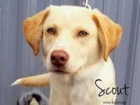 Scout's story If you are not viewing this adoption