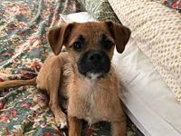 Scout's story FOSTER UPDATE:  Scout is a