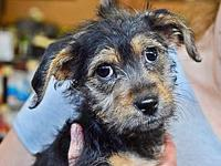 Scrappy Doo's story Scruffy Puppies x4! Poppy, Amelia