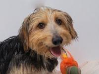 Scruffy (D18-237)'s story Scruffy is a 5 year old,