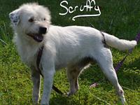 Scruffy's story Scruffy is very sweet and playful he