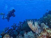 Scuba Cruise Grand Cayman and Cozumel Sailing from