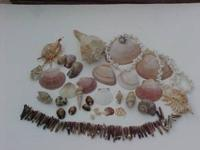 Sea shells drilled-undrilled,Sea Urchin