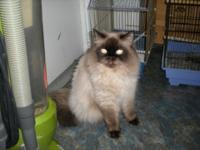 I am rehoming my male Himalayan, he turned 5 years old