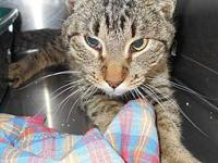 Sean - Male tabby in 19 Call 's story This friendly