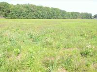 20.5 +/- acres cleared and level near Eastline Rd in