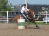 For sale Splash Bar Supreme 13 year old mare that has