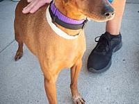 Sebastian's story Sebastian is a neutered male Min.