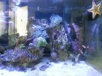 Hello everybody. I am selling on huge see fish tank