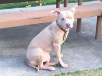 Seeking a loving new home for my one year old pitbull,