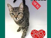 My story Selena is a sweet young petite feline. She is