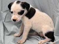Selena's story Selena is one of 7 pups that came in
