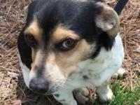 My name is Selig! I am neutered, microchipped, and