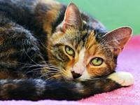 Selina's story Hello, I'm Selina! I enjoy pets and I'll
