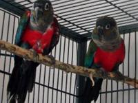 I am selling all of my birds. All affordable offers for