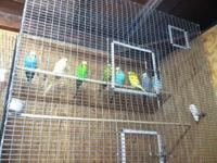 Giving up my bird pastime and selling all my birds,