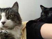 Selma and Woody  Bonded Pair of Adorable Cats Seek Home